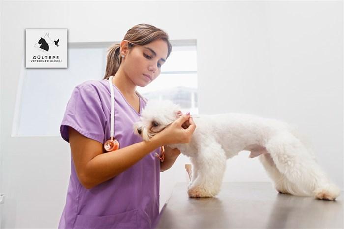 4.levent veteriner