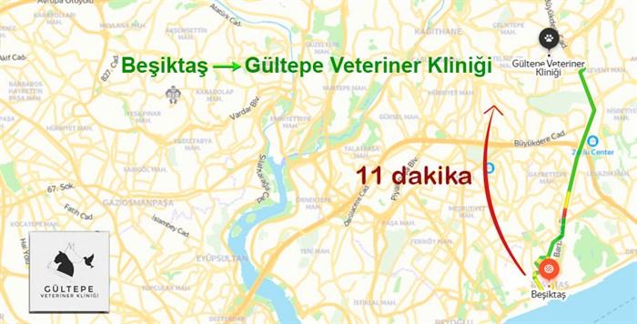 Beşiktaş Veteriner