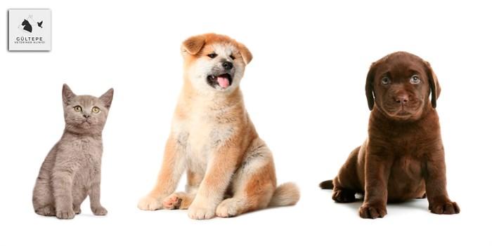 kedi ve köpeklerin diş temizliği